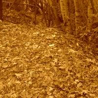 Photo taken at Robert Louis Stevenson State Park by Nancy C. on 11/11/2012