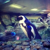 Foto tomada en Inside Penguin Crawl Tube por Michele B. el 3/17/2013