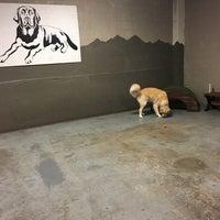 Dogwood Indoor Dog Park - Dog Run in Seattle