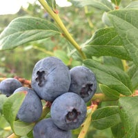 Photo taken at Wilson's Blueberry Farm by Jonathan W. on 7/13/2013