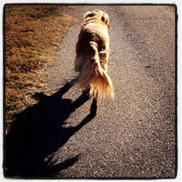 Photo taken at Shelby Farms Dog Park by Jessica T. on 1/19/2013