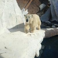 3/27/2013 tarihinde Wendy D.ziyaretçi tarafından Wild Arctic'de çekilen fotoğraf