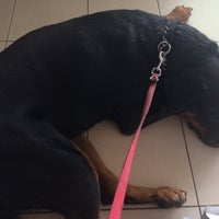 Photo taken at Philos Veterinary Clinic by N.Keong K. on 10/15/2016