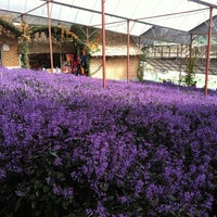 Photo taken at Cameron Lavender Garden by Jayne on 8/16/2013