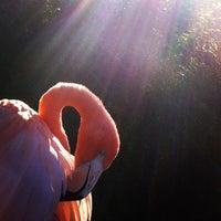Photo taken at Flamingo Exhibit by david b. on 11/26/2012