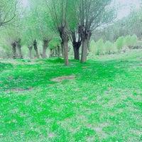 Photo taken at Engilli piknik Alan by Glsrn on 4/20/2016