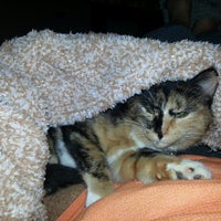 Photo taken at Banfield Pet Hospital by Lisa H. on 2/4/2014