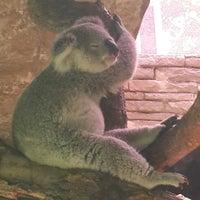 Photo taken at Koala Zone by Haruka W. on 4/12/2015