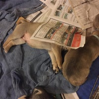 Photo taken at Compassion Without Borders by Happy Hounds Massage /. on 1/9/2017