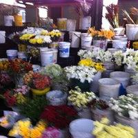 Photo taken at Trafalgar Place Flower Market by thuto m. on 4/3/2013