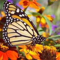 Photo taken at Butterfly Pavilion by Colorado Card on 9/25/2012