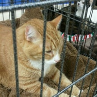 Photo taken at Petco by Beverly C. on 11/18/2012