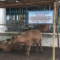 Photo taken at Alun - Alun Kidul Surakarta by Ferdinan P. on 11/16/2016