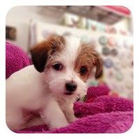 Photo taken at Wawaw, ropa para perros by Wawaw R. on 7/3/2013