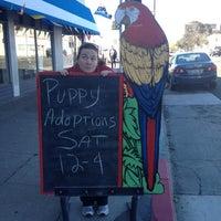 Снимок сделан в Andy's Pet Shop пользователем Princess Susannah G. 11/10/2012