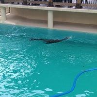 10/7/2012 tarihinde Ulisesziyaretçi tarafından California Sea Lions Pool'de çekilen fotoğraf