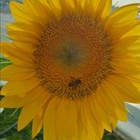 Das Foto wurde bei Sunflower Garden von Alvin L. am 7/21/2013 aufgenommen