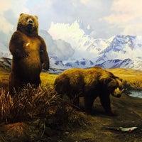Photo prise au Hall of North American Mammals par Leslie C. le1/14/2017