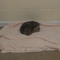 Photo taken at Peachtree City Animal Clinic by Jason W. on 6/28/2013