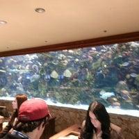 Photo taken at The Mirage Aquarium by Jake S. on 1/18/2013