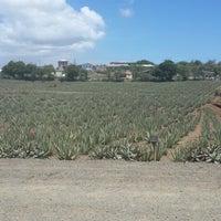 Foto tomada en Aloe Vera Plantation. por Karen A. el 8/8/2013