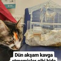 2/19/2018 tarihinde 'Fatma N.ziyaretçi tarafından Yenimahalle Veteriner Kliniği'de çekilen fotoğraf