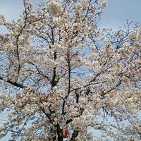 Photo taken at 山塩緑道 by しおまき on 3/31/2016