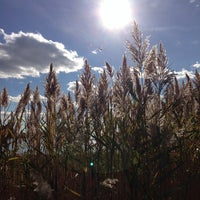 Photo taken at Marshlands Conservancy by Francesco B. on 10/27/2013