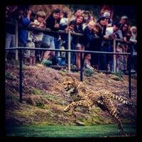 2/3/2013 tarihinde Oliver C.ziyaretçi tarafından Cheetah Run'de çekilen fotoğraf
