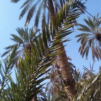 Photo taken at Oasis Tozeur by Inès :. on 3/23/2016