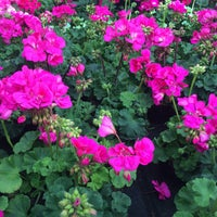 Photo taken at Amager Planteland by Louise H. on 5/22/2016
