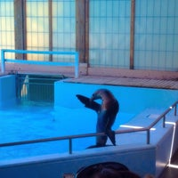 Photo taken at Sea Lion Show by Nicole B. on 10/2/2015
