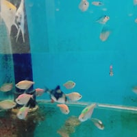 Photo taken at Can Petshop by Sinan A. on 10/31/2015