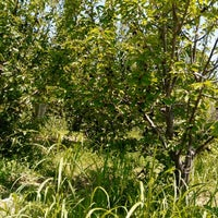 Photo taken at Onal Garden Enterprises Inc. by Hüsamettin Ö. on 6/13/2015