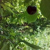 Photo taken at Onal Garden Enterprises Inc. by Hüsamettin Ö. on 6/8/2014