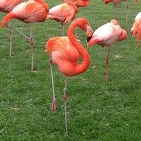 Das Foto wurde bei Kölner Zoo von Gabriel F. am 4/26/2013 aufgenommen