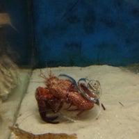 Photo taken at Gulf Specimen Aquarium by Catie D. on 8/6/2015