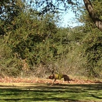 Photo taken at Irvine Regional Park by Lauren R. on 1/20/2013