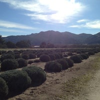 Photo taken at Andre Lavendar Farm by Evelynne S. on 1/7/2013