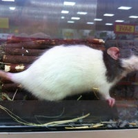 Photo taken at Pets At Home by Michael T. on 10/3/2012