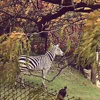 Photo taken at Indianapolis Zoo by Bailey A. on 10/20/2012