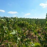 Photo taken at arcadia wine yards hamitabat by Alp G. on 9/14/2013