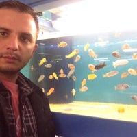 Photo taken at Calvus akvaryum by Okan K. on 11/3/2014