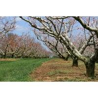 Wemrock Orchards