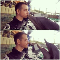 Photo taken at Dolphin Encounter by Yury K. on 2/9/2015