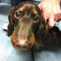 Photo taken at Massachusetts Veterinary Referral Hospital by Rodrigo M. on 1/10/2013