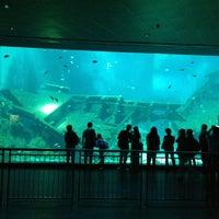 Photo taken at S.E.A. Aquarium by Wanderlusterer C. on 7/28/2013