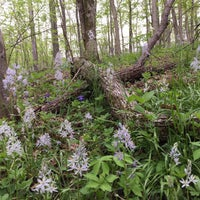 Photo taken at Turkey Run Park by Andrew R. on 5/2/2016