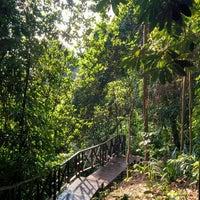 Photo taken at Bukit Nanas Forest Reserve by Julian W. on 9/30/2017