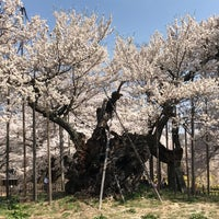 Photo taken at 実相寺 by Yusuke M. on 4/4/2018